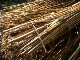 Bundle of Hemp Stalks