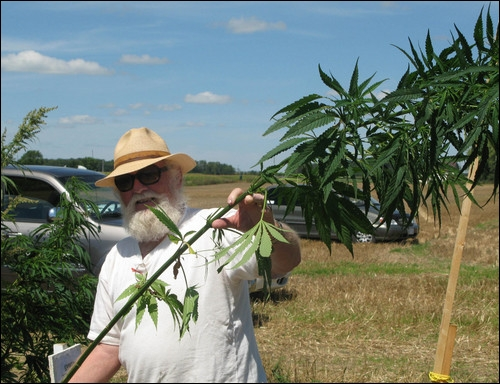 Gordon Scheifele shows an industrial hemp plant