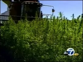 Hemp in California