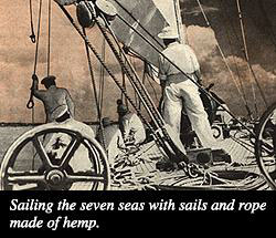 Hemp: the New Billion Dollar Crop