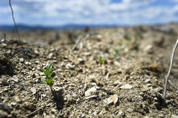 Montana hemp crop denied water