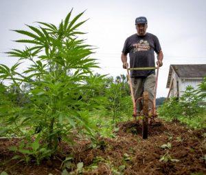 Oregon hemp farmer